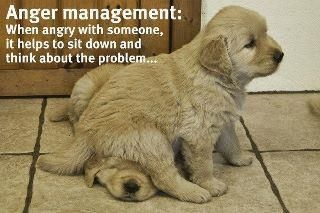 Anger Management - A puppy sitting on a puppy image