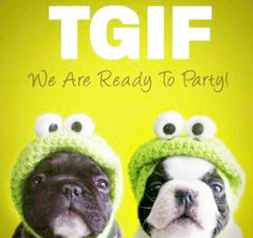 TGIF DOGS Image From PicCollage